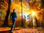Why Climate Change is Making it Harder to Chase Fall Foliage